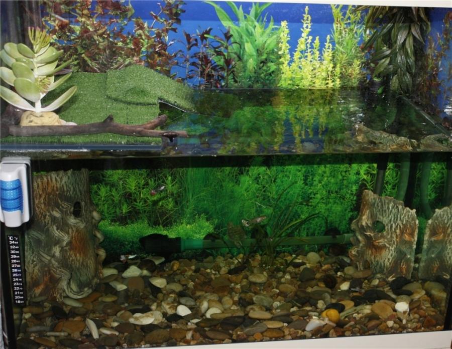 Аквариум для красноухих черепахах в домашних условиях